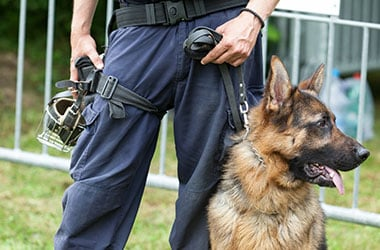 Policeman with a German shepherd on duty